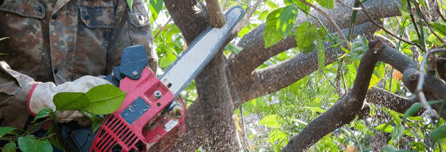 Elagage et abattage d'arbres